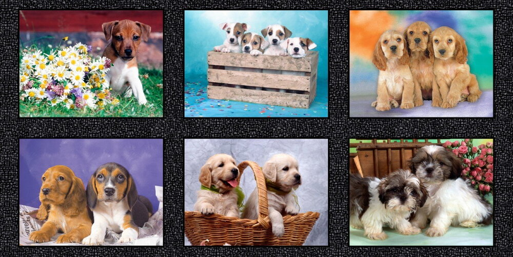 Somebody to Love - Puppies - Digitally Printed by Whistler Studios for Windham Fabrics