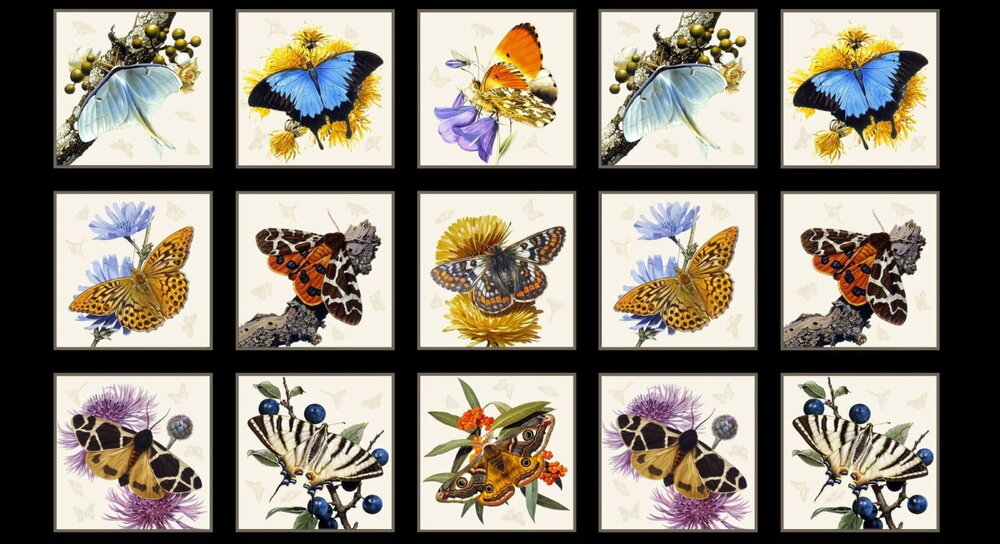 Butterflies and Moths on Black Panel by Elizabeth's Studio