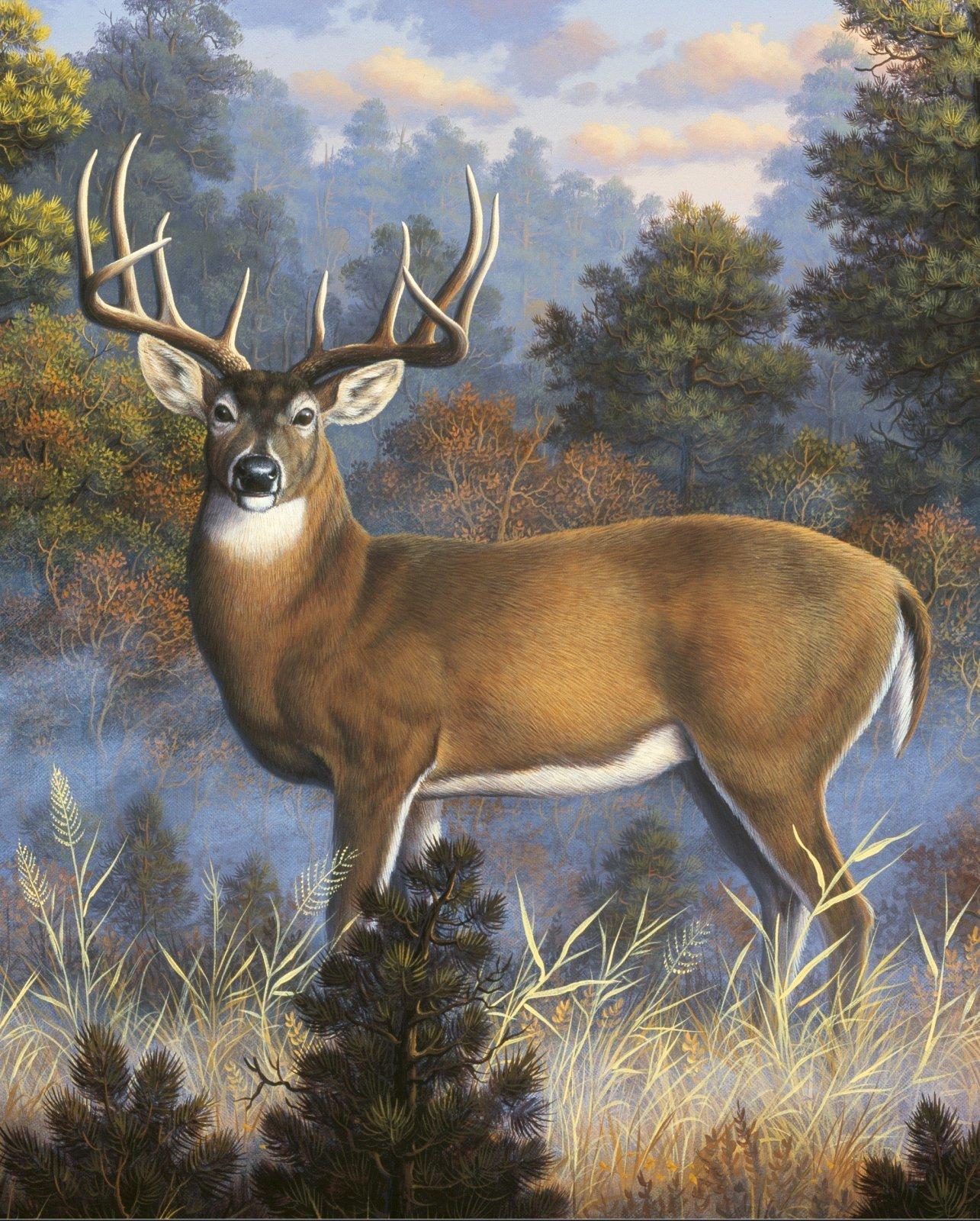 Morning Light Deer Panel by David Textiles