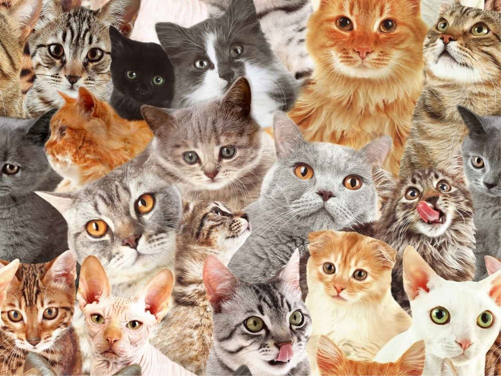 SPECIALTY FABRICS: Packed Cats: Cats by MDG Digital