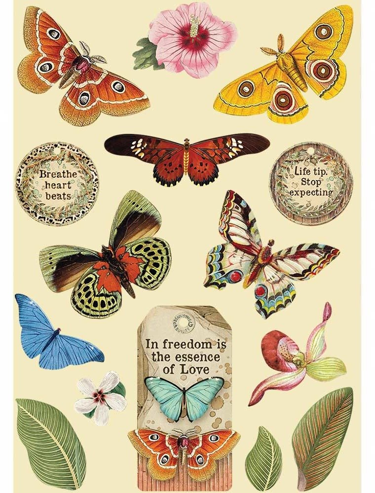 A5 Colored Wooden Frames, Amazonia - Butterfly