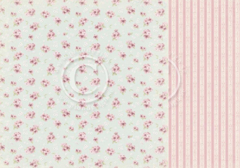 Cherry Blossom Lane - Cherry blossom
