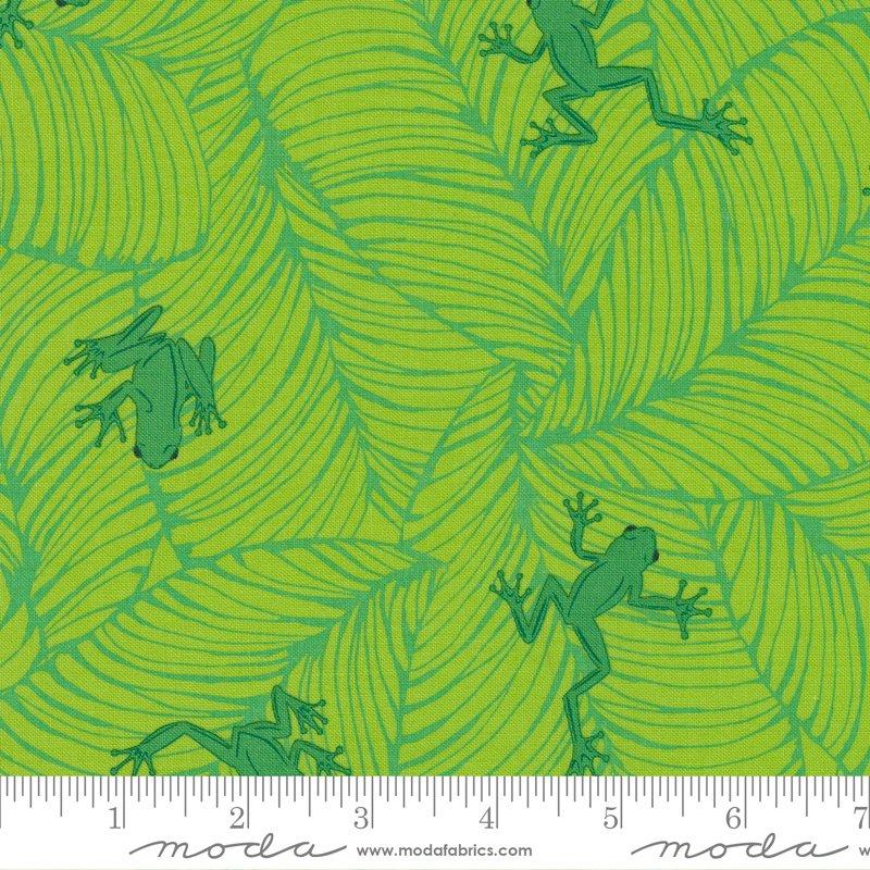 20786 19 - Moda Jungle Paradise Oh Froggy - Seedling