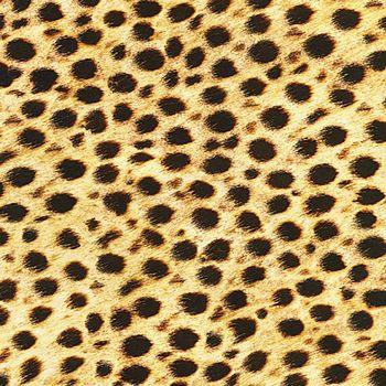 SRKD-19871-286 Robert Kaufman Animal Kingdom - Wild