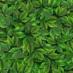 27848-G Quilting Treasures Always Face Sunshine Leaves - Green
