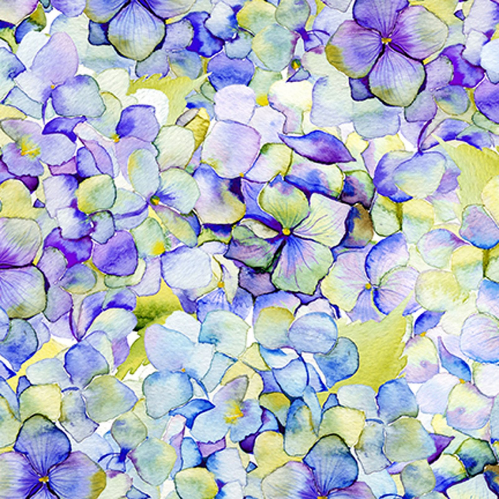 IBFPAT3PAT-1 - In the Beginning Patricia Hydrangea - Purple
