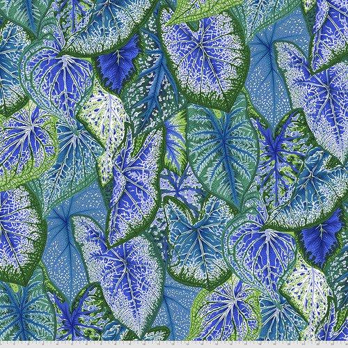 PWPJ108.BLUE - Caladiums - Blue