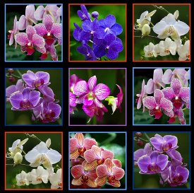 Elizabeth's Studio-Digital Gardens-Orchids  DP512-Black
