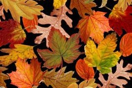 Exclusively Quilters-Harvest  60506-8