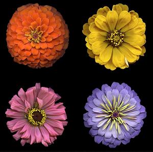 Flower Power - Panel - 44 x 44