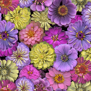 Flower Power - Floral Purple
