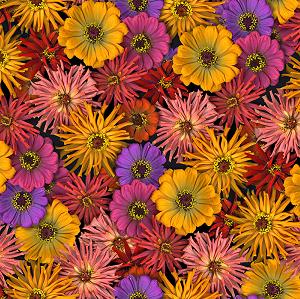 Flower Power - Floral Orange