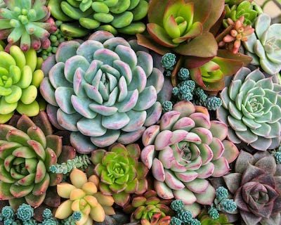 Pink Picasso Paint by Numbers Kits for Adults 16x20 (Sensitive Succulents)