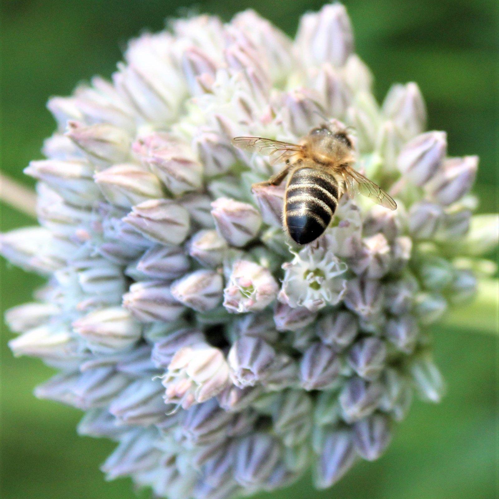 812 Candle - Honey Bee Mine