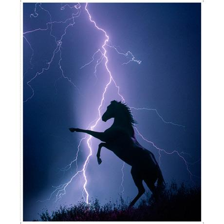 QT-Horse Panel midnight