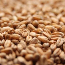Oak Smoked Wheat