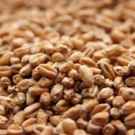 Wheat (Weyermann)
