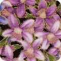 AVERY HILL - Metallic Lavender