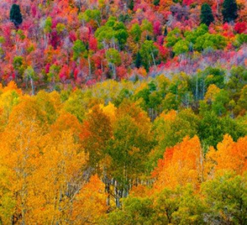 Autumn Pallete