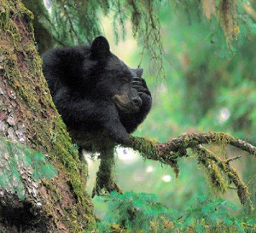 Bad Bear Day