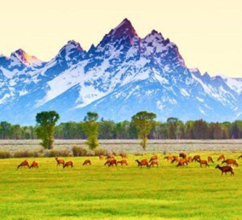 Teton Safari