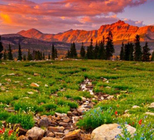 Uinta Creek and Wildflowers