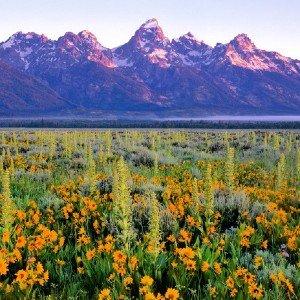 Antelope Flats Panoramic Unframed Image