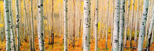 Aspen Army Panoramic Unframed Image