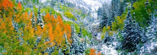 Wasatch Autumn Snowfall Panoramic Framed Image