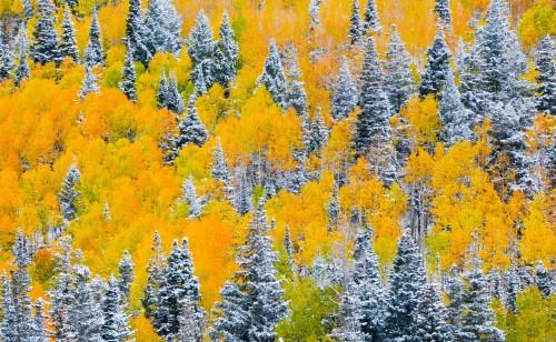Autumn Trim Unframed Photograph