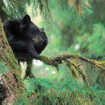 Bad Bear Day Deluxe Framing