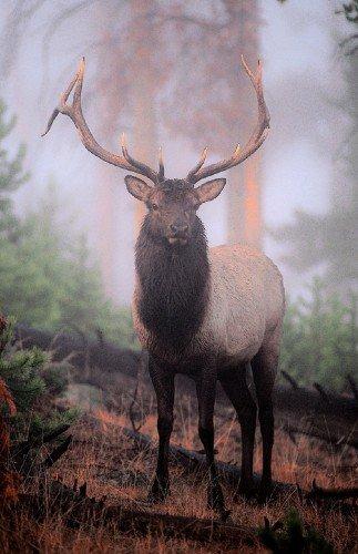 Blue Elk Deluxe Framing