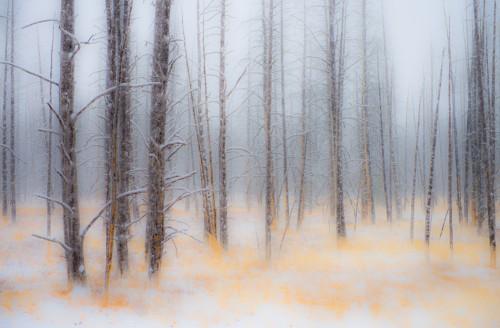 Burnt Out Unframed Photograph