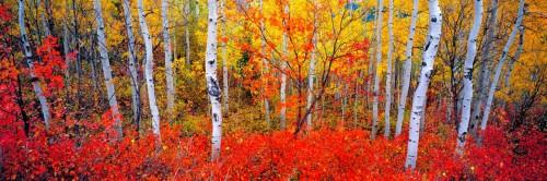 Changing Seasons Panoramic Deluxe Framing