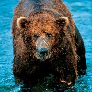 Lord Grizz Unframed Image