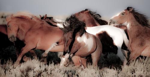 Mustangs Panoramic Framed Image