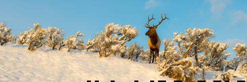 Winter Sage Panoramic Unframed Image