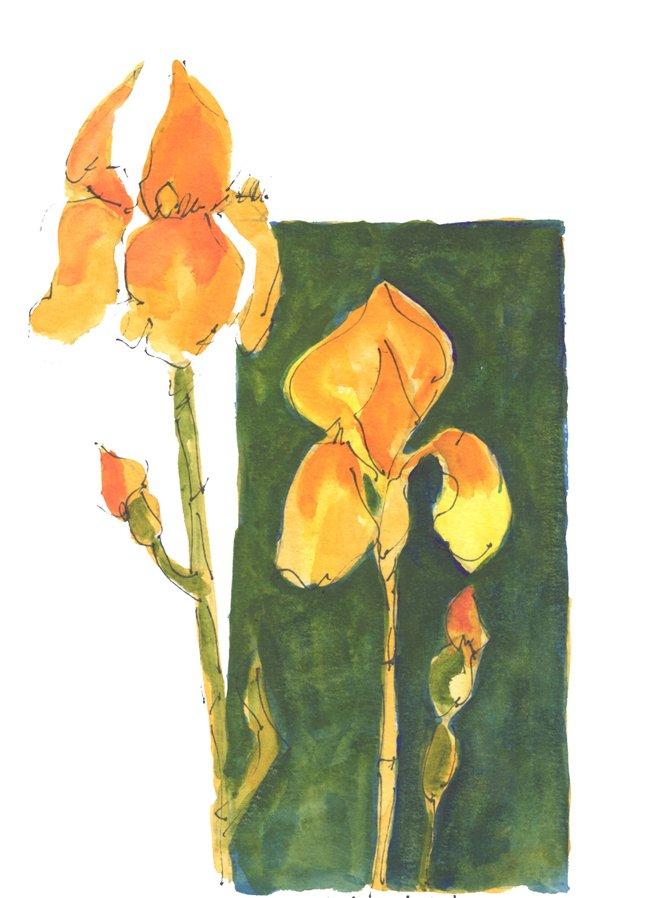 Intermediate Watercolor Painting Video Class Yellow Iris Background FL119