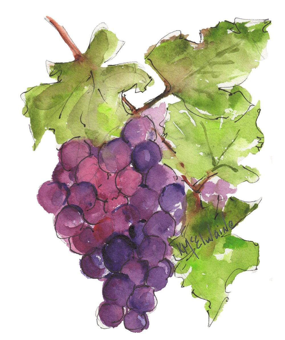 Oct 18 and 19 How to Watercolor Paint Grape Cluster FL168 Zoom Class