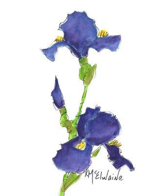 Intermediate Watercolor Painting Video Class Blue or Purple Iris FL270