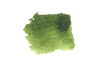 Sap Green Daniel Smith Refill