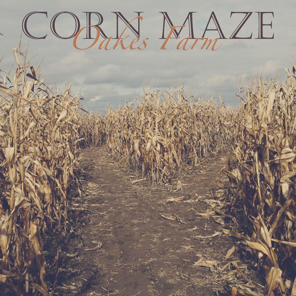 Vintage Corn Maze