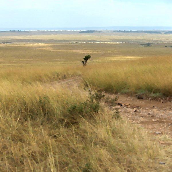 Safari Savanna Right