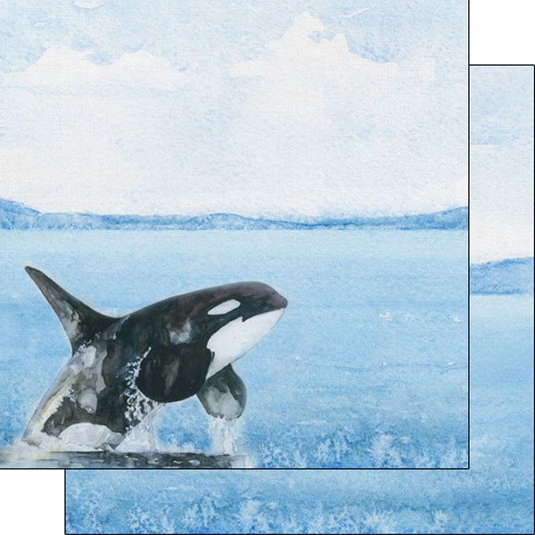 Orca Safari