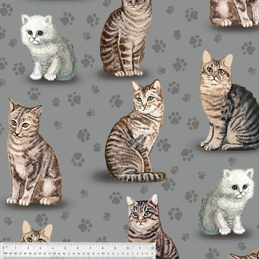 Cats on Gray