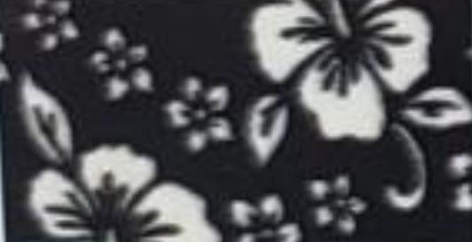 Hibiscus on Black