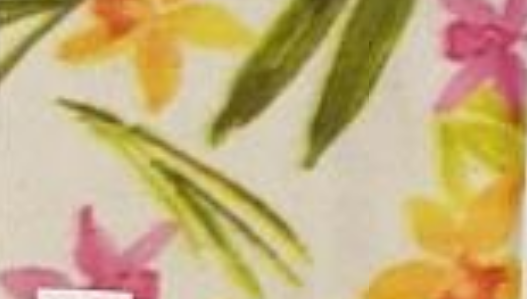Daffodils on Cream