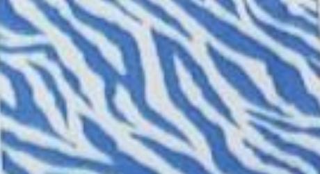 Blue and White Zebra