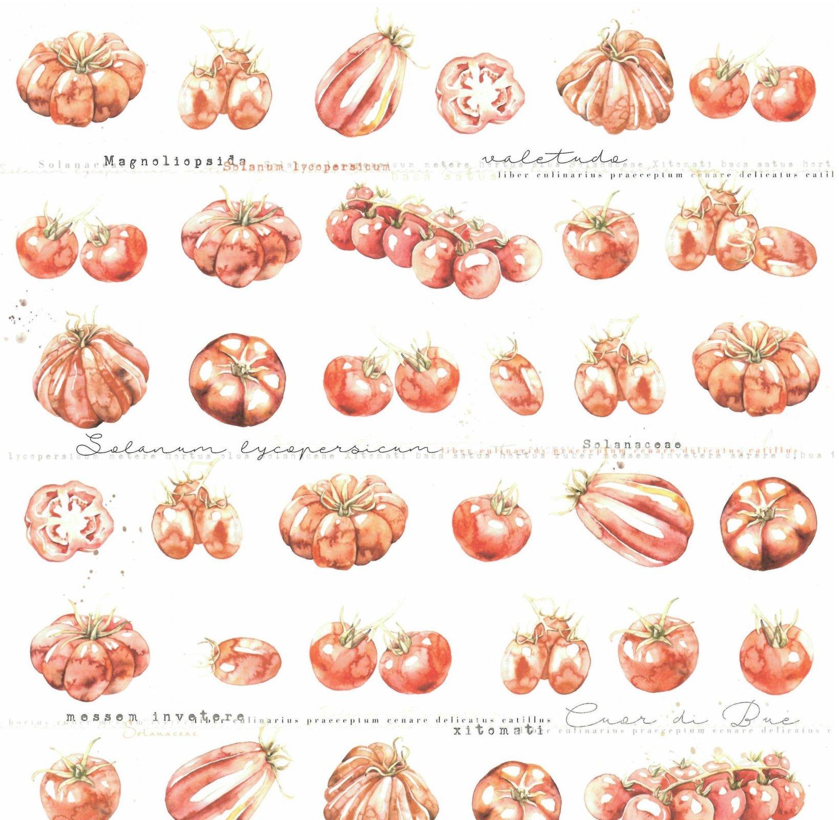 Alexandra Renke cooking cardstock 12X12 - Tomatoes
