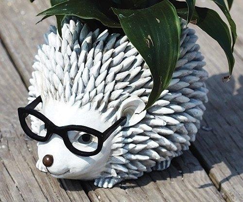 Hedgehog With Glasses Planter  6.5H